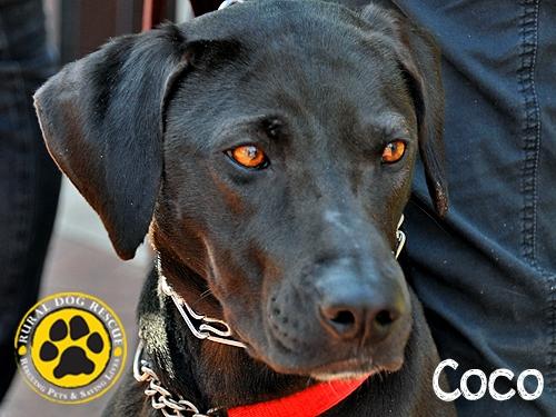 CoCo - Rural Dog Rescue