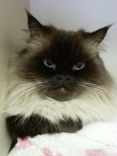 Justice - NoVa Cat Clinic