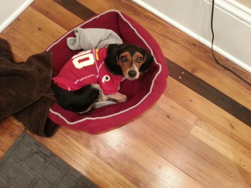 Riley Likes the Redskins