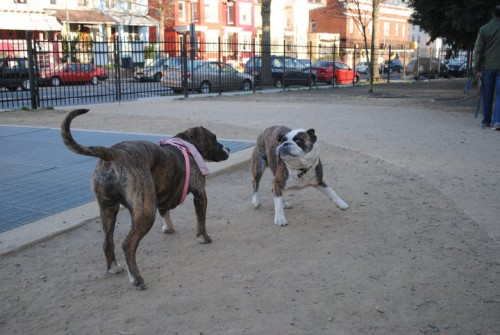 columbia_heights_dog_park