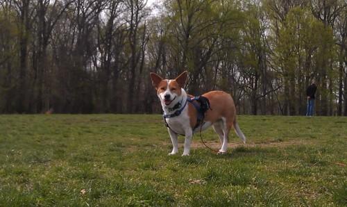 lola in the park
