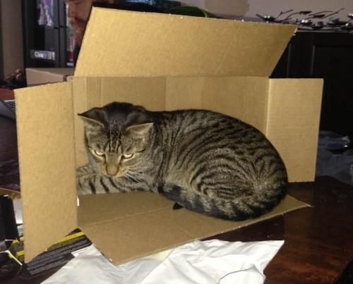 missing_cat