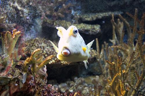 national_aquarium_closing_dc