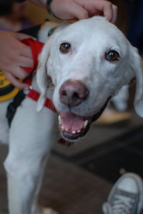 Murphy - City Dogs Rescue