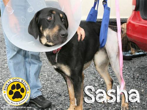 Sasha - Rural Dog Rescue
