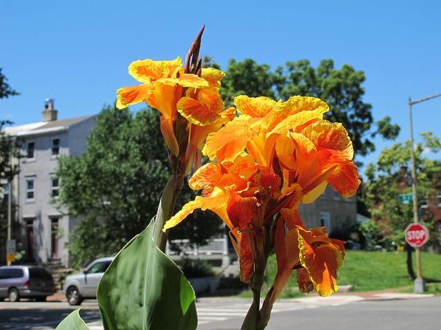 curb_garden_flower
