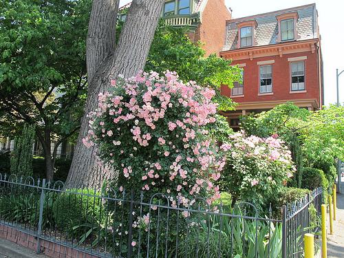 garden_flowers