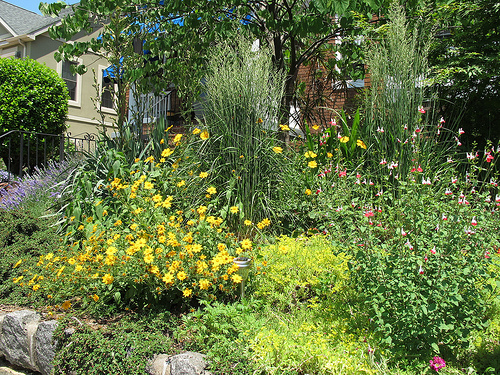 garden_petworth
