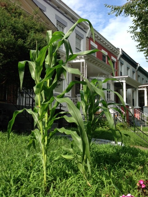 corn_row_houses