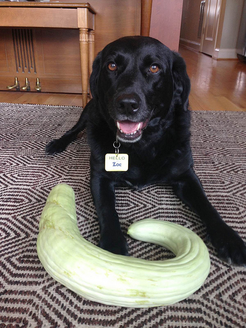 cucumber_contest_popville