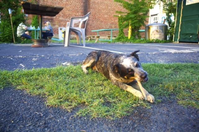 dawg-bone