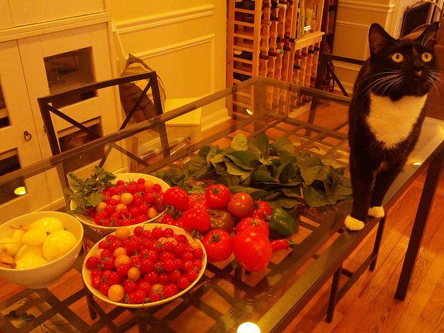 garden_tomato_contest_popville