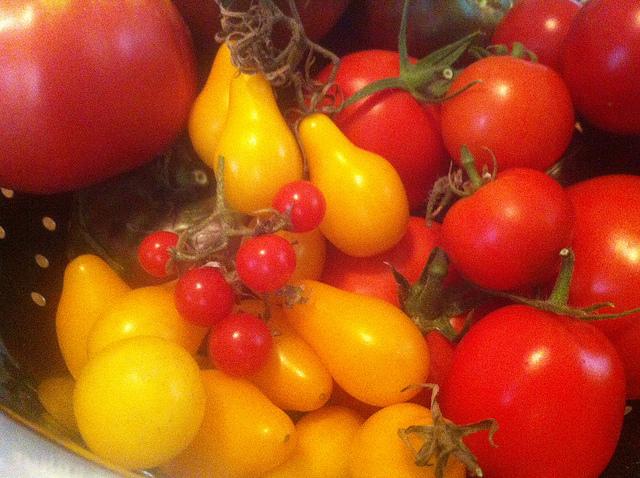 garden_tomatoes_popville