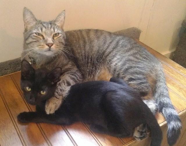 Omar and Stringer Hugging