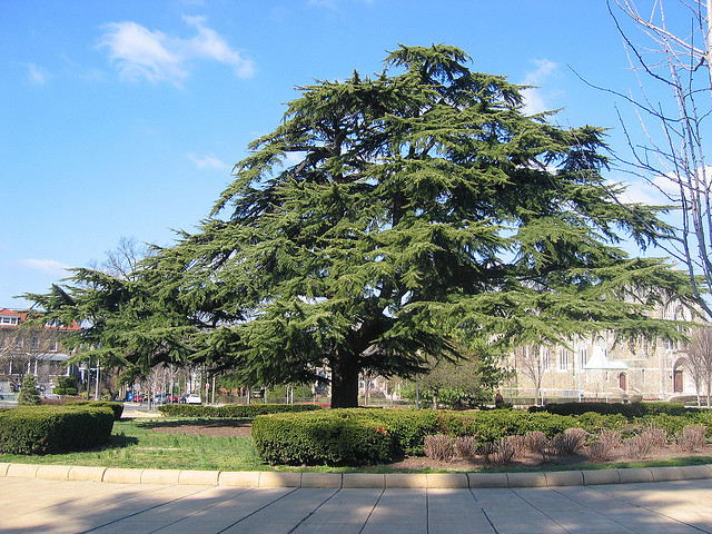 PoPville_grant_circle_tree
