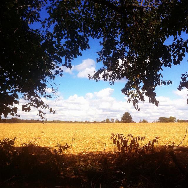pumpkin_patches_farms_dc