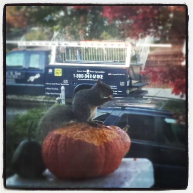 Pumpkin Theif