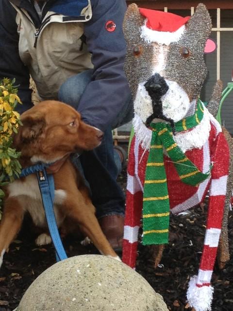 Ricky and Christmas Dog