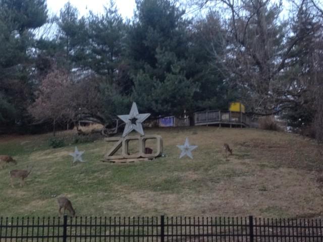 Zoo Deer 2