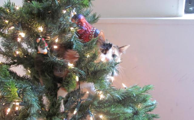 cat_christmas_tree