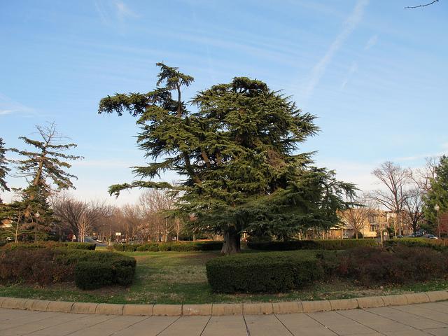 grant_circle_tree_2007