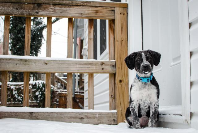 Chia in snow 10wks 10