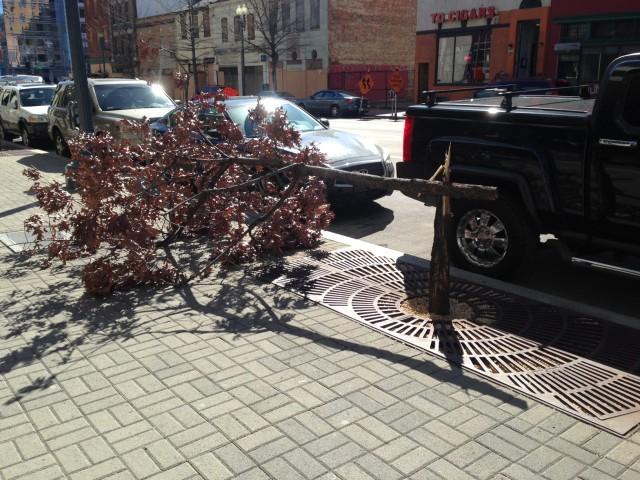 wind_snaps_tree