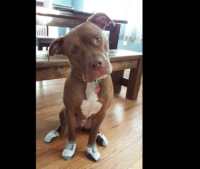 dog_socks