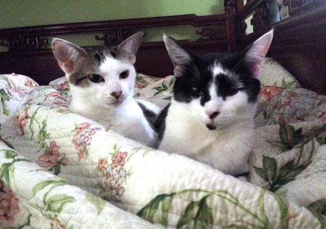 Kitties May 2014 2 - Copy