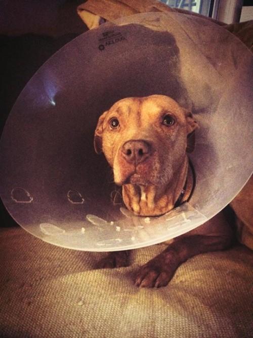 Sasha surgery