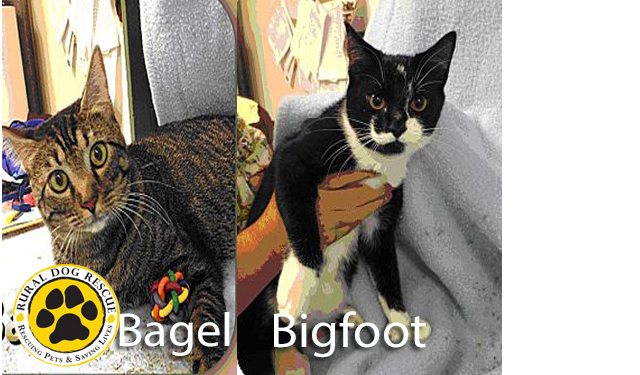 bagel_and_bigfoot