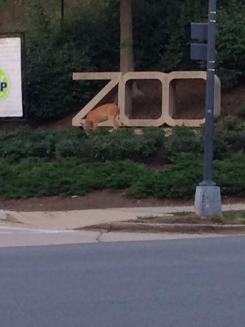 deer_zoo