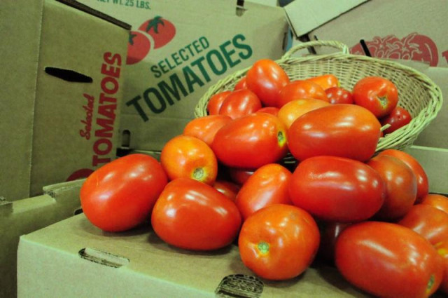 tomato_glut