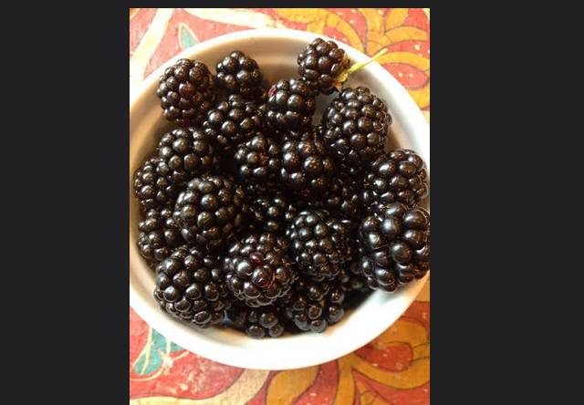 blackberries_hill_east