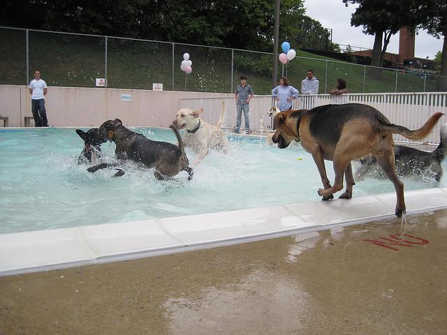 doggie_day_swim_dc_2014