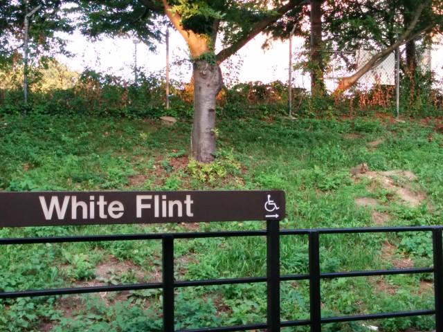 white_flint_ground_hog