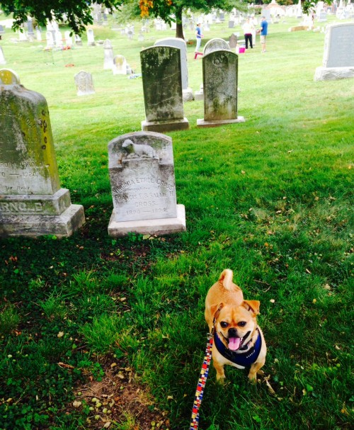 Pugsley_Congressional Cemetery Day of the Dog 1