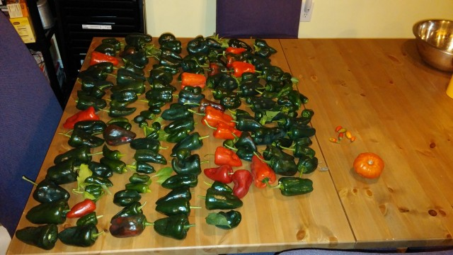 pepper_haul