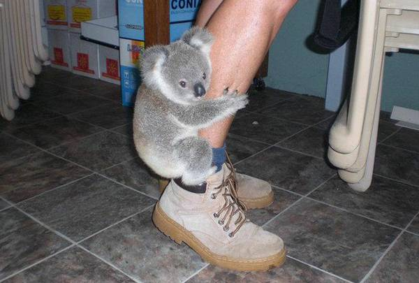 koala_bear_columbia_heights
