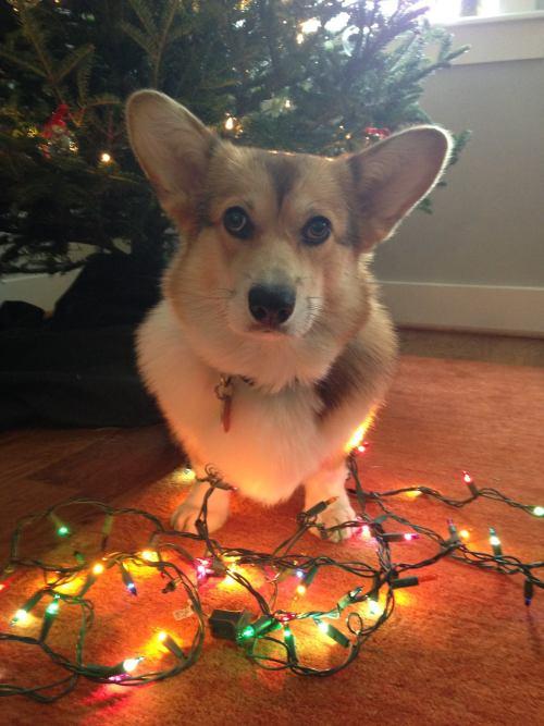 Jackson help with Christmas decorating