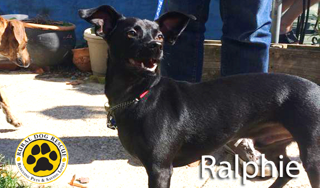 Ralfie - Rural Dog Rescue