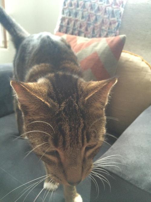 cat_found