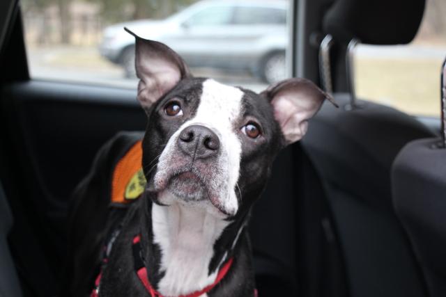 Kena - Washington Humane Society