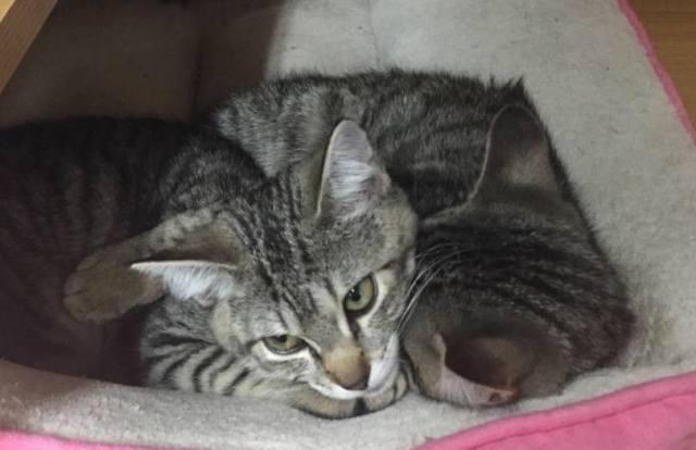 stolen_kittens-columbia_heights