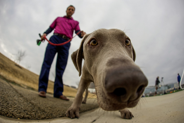 dog_friendly_dc
