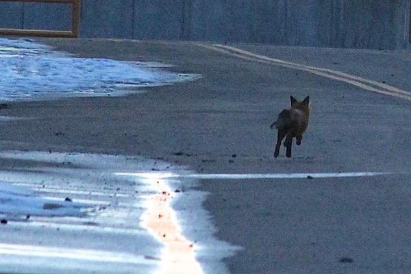 fox_rfk