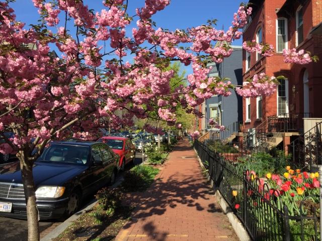 blooming in bloomingdale