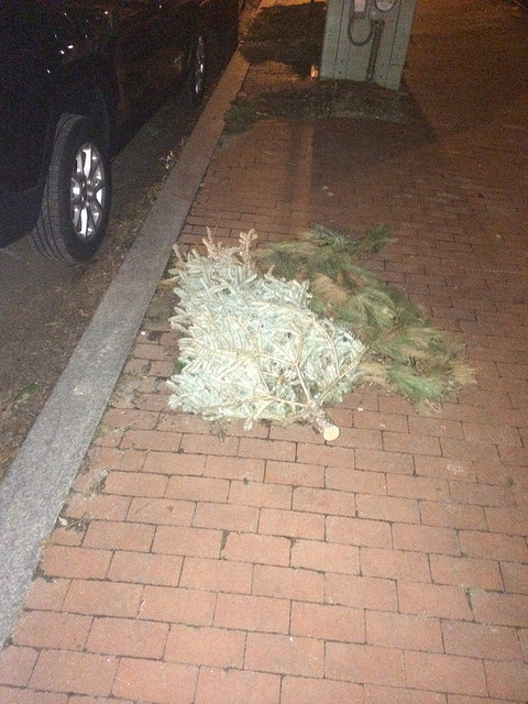 christmas_tree_gtown