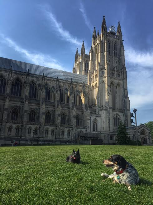 Cathedral puppies