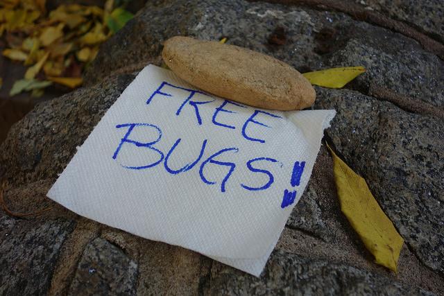 free bugs